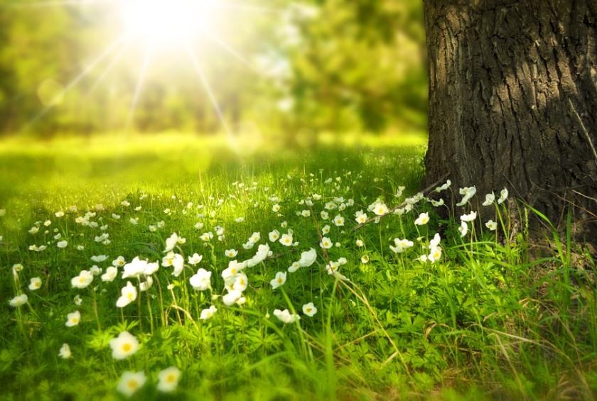 spring-276014_840_565