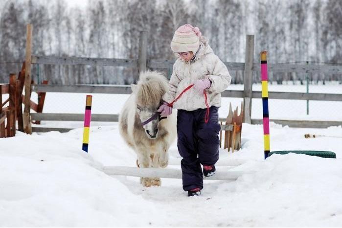 Пони-ферма_Мини-кони_01