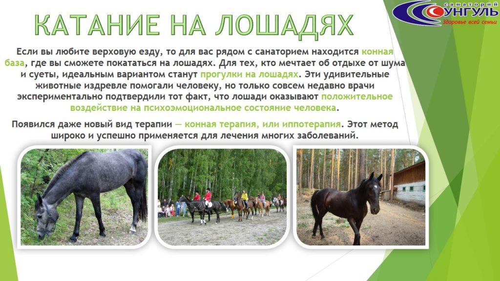 Сунгуль_реклама (6)